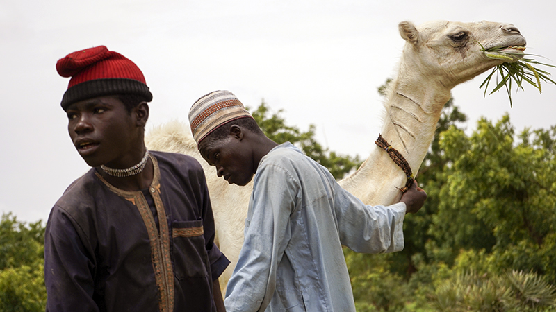 Two young nomads and their camel. Due to rising demand for agricultural land, traditional herding grounds and migratory routes are being encroached upon, pitting farmers against herders.  Credit: Rafe H Andrews, Dawning