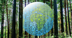 How is the World Bank Group Supporting Environmental Sustainability?